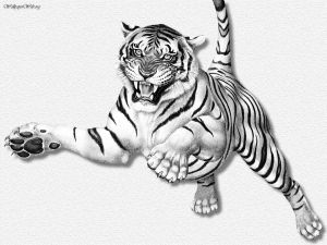 Tiger_Leaping_ERC