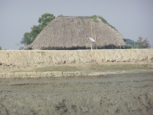 The Thatched house with DTH