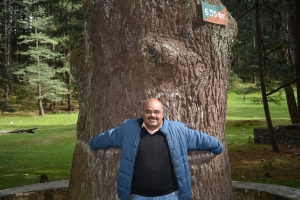 The Mammoth Deodar Tree