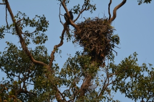 Vulture and Nest