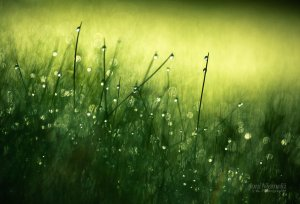 morning_dew_iii_by_nitrok-d2qbz57
